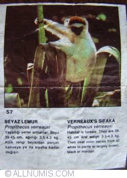 Image #1 of 57 - Verreaux's Sifaka (Propithecus verreauxi)