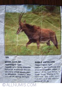 Image #1 of 59 - Sable Antelope (Hippotragus niger)