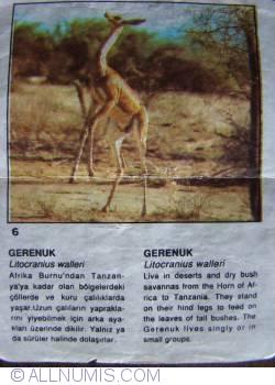 Imaginea #1 a 6 - Gazela - girafă (Litocranius walleri)