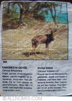 Image #1 of 60 - Rusa Deer (Cervus timorensis)