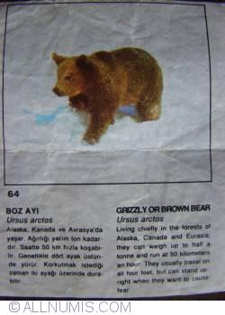 64 - Grizzley or Brown Bear (Ursus arctos)