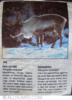 Image #1 of 68 - Reindeer (Rangifer tarandus)