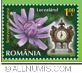 1 Leu 2013 - Flowers' Clock  - Viper's Grass (Scorzonera rosea)