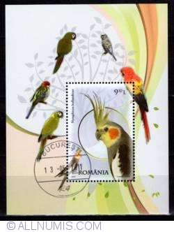 Image #1 of 9.10 Lei 2011 - Papagalul nimfă (Nymphicus hollandicus)