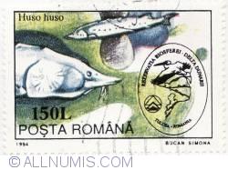 150 Lei-Rezervatia Biosferei Delta Dunarii-Huso huso