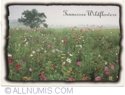 Image #1 of Tennessee - Wildflowers (2003)