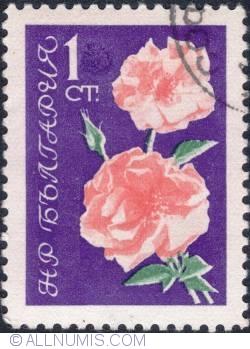 Image #1 of 1 Stotinka -Roses 1962