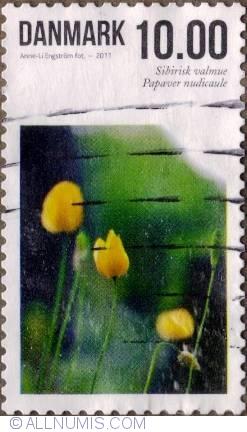 Image #1 of 10 Kroner 2011 - Poppy (Papaver medicinale)