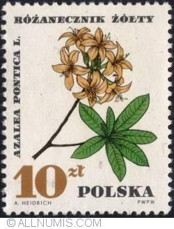 Image #1 of 10 złotych 1967 - Azalea pontica.