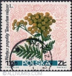 1,15 złotego 1967 - Common tansy (Tanacetum vulgare)