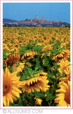 "Image #1 of San Gimignano - ""Sunflowers"" (2016)"