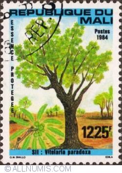 Image #1 of 1225 Franks 1984 - Vitelaria Paradoxa
