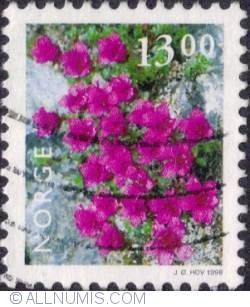 13 kroner 1998 - Purple saxifrage