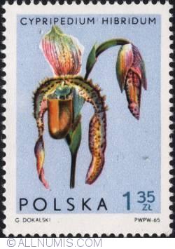 Image #1 of 1,35 złotego 1965 - Lady's slipper orchid (Paphiopedilum hybridum)
