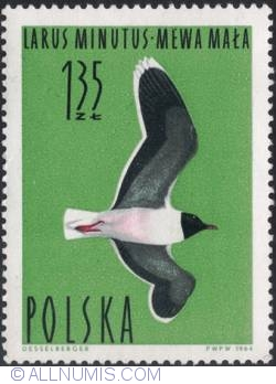 Image #1 of 1,35 złotego -Little gull