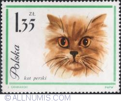 Image #1 of 1,35 złotego -Persian cat