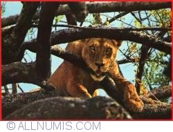 Image #1 of Lion