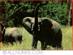 Image #1 of Wildlife of Kenya - Elefants