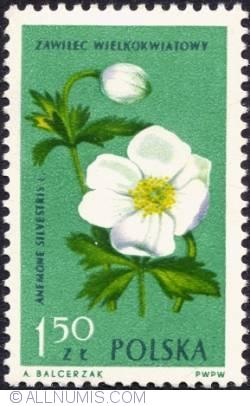 Image #1 of 1,50 złotego - Anemone.