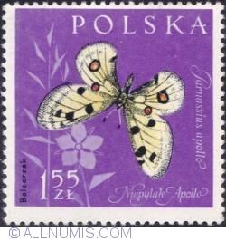 Image #1 of 1,55 złotego - Apollo butterfly