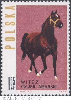 """Image #1 of 1,55 złotego -Arabian stallion """"Witeż II"""""""