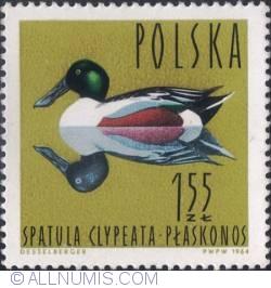 Image #1 of 1,55 złotego -Northern shoveler