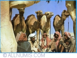 Image #1 of Camels and herders