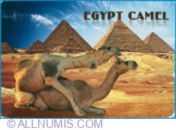 Image #1 of Camels