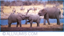 Image #1 of Elephants