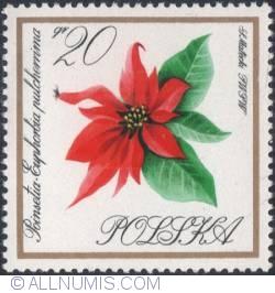 Image #1 of 20 groszy 1966 - Poinsettia, Christmas star