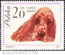 20 groszy -Cocker Spaniel