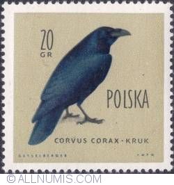Image #1 of 20 groszy -Raven.