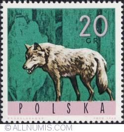 Image #1 of 20 groszy1965 - Wolf