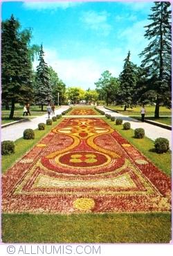 Ciechocinek - The carpet made of flowers (1972)