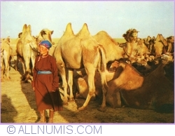 Image #1 of Camels in the steppe (1979)