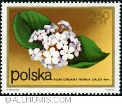 Imaginea #1 a 2,50 Zloty - Viburnum. (Viburnum carlesii) 1972