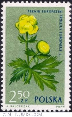 Image #1 of 2,50 złotego- Globeflower.