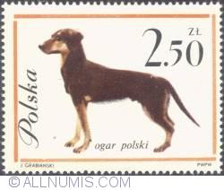 Image #1 of 2,50 złotego- Polish Hound