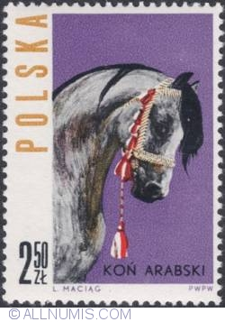 Image #1 of 2,50 złotego - The head of an Arabian horse
