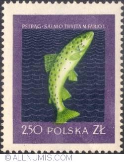 Image #1 of 2,50 złotego - Trout,