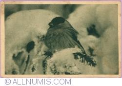 Image #1 of A bird