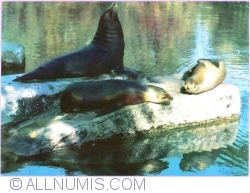Image #1 of California sea lion
