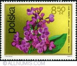 Image #1 of 8,40 Złote - Lilac. (Syringa Vulgaris) 1972