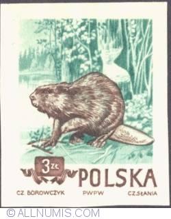 Image #1 of 3 złote 1954 - Beaver. (imperf.)