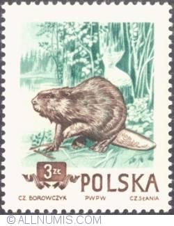 Image #1 of 3 zlote 1954 - Beaver