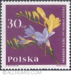 Image #1 of 30 groszy 1964  - Freesia (Freesia hybrida)