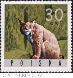 Image #1 of 30 groszy 1965 -Lynx