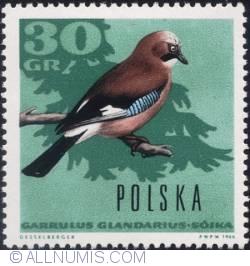 Image #1 of 30 groszy 1966 - Eurasian jay.