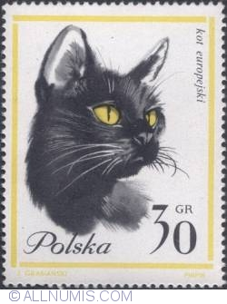 Imaginea #1 a 30 groszy - European cat