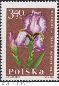 Image #1 of 3,40 złotego 1964 - Iris (Iris barbata)